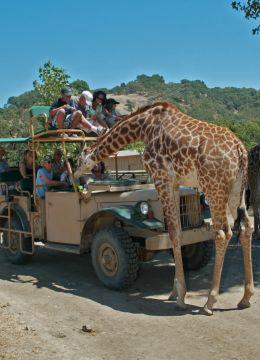 SafariWestPic