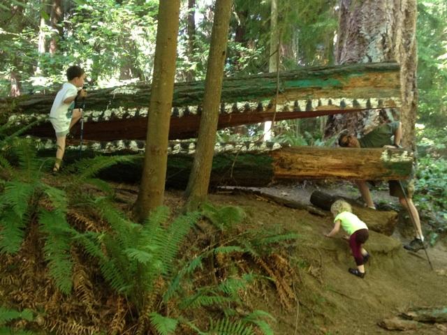 Schmitz Park Preserve Aligator shot