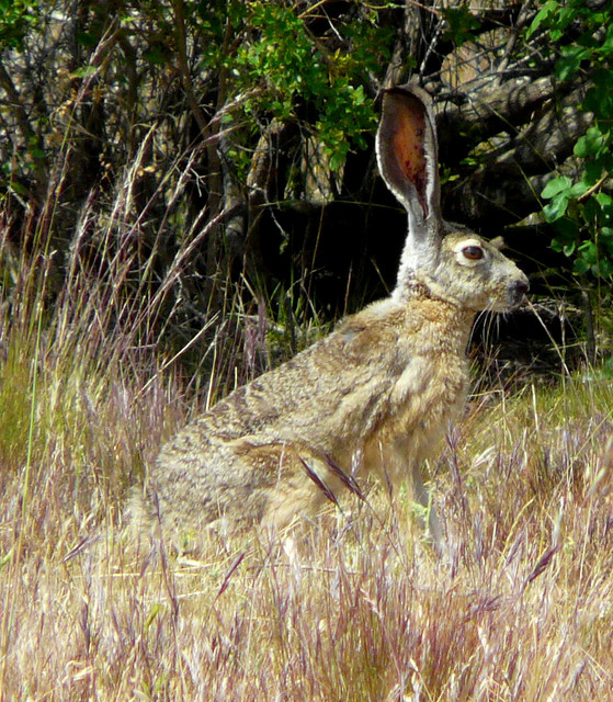 rabbit in edgewood park preserve via flickr by Dawn