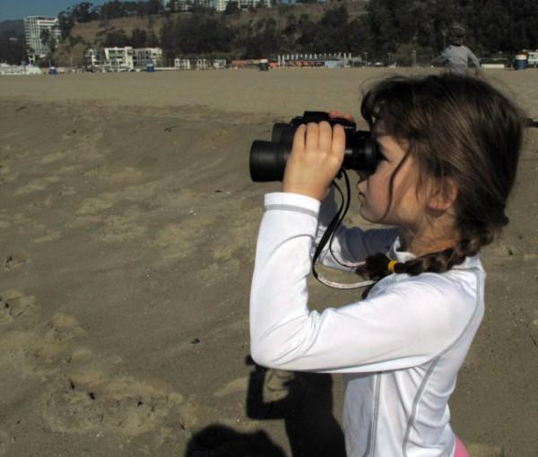 beach birdwatch