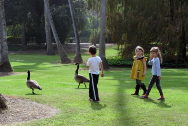 arboretum goose