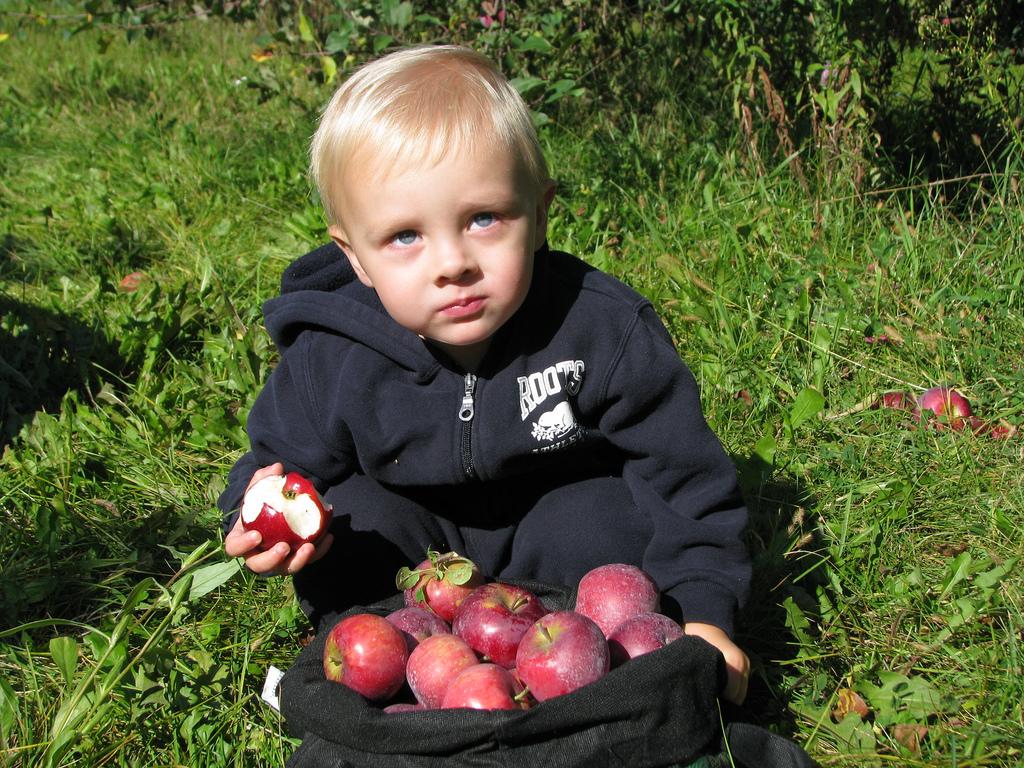 apple-picking1