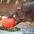 boo at the zoo, halloween zoo