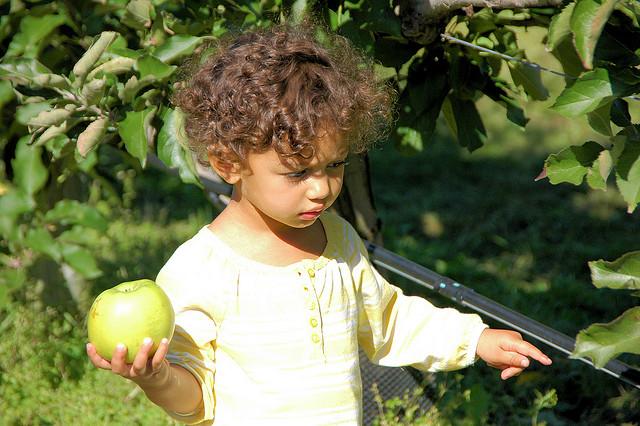 kid apple picking
