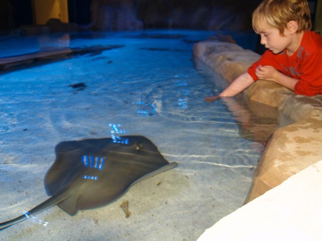 aquarium-7