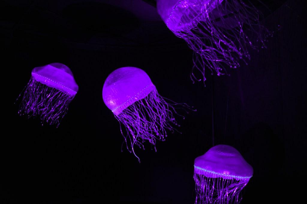 12. Crystal jelly