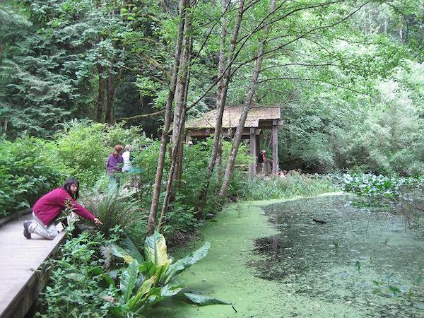 Audubon Sanctuary Pond - Elie Boas