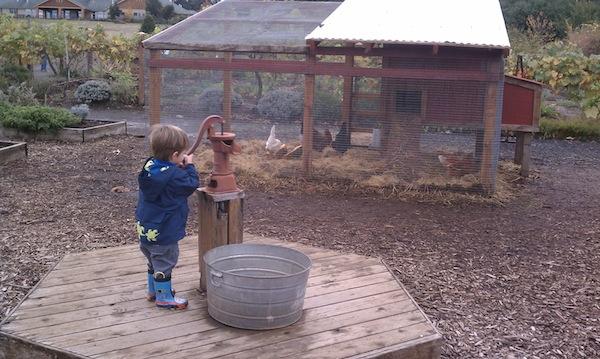 oregon garden coop and pump