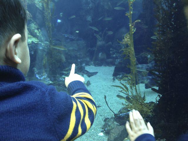 pointingfish