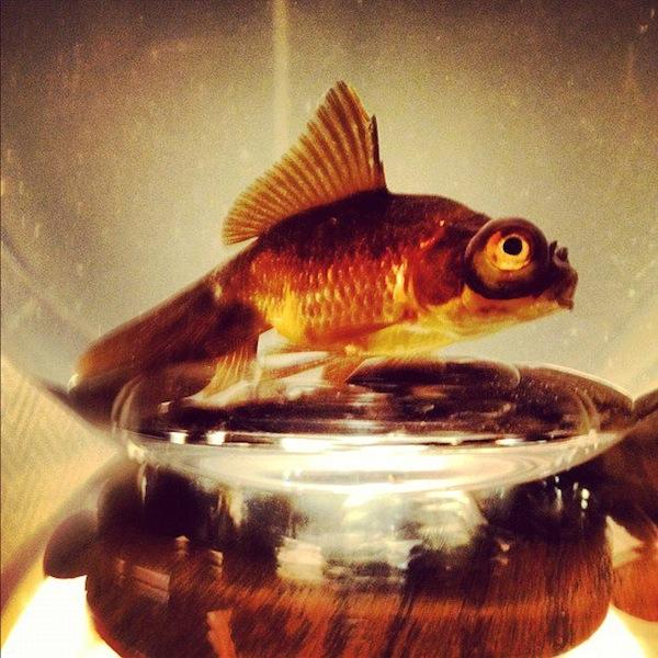 soho-grand-fish
