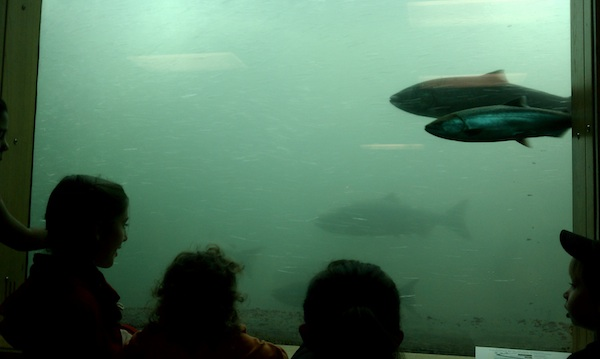 bdfh kids at salmon window