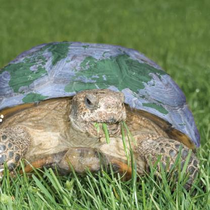 earthday_turtle