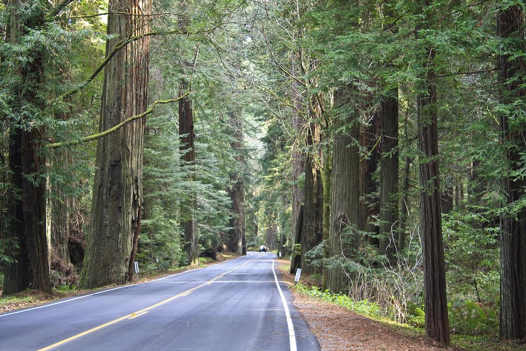 redwoodforest_kenjarvisphotography