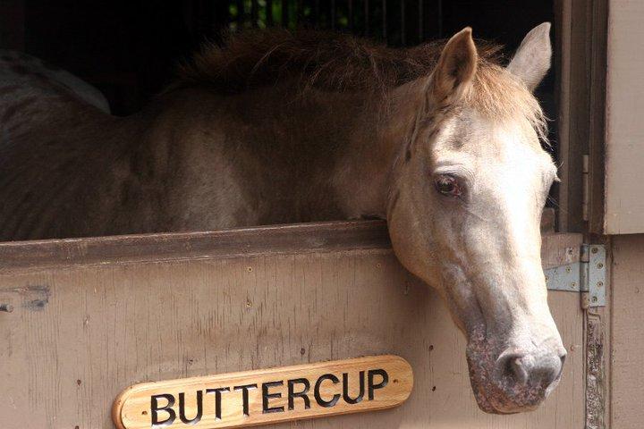 double-j-horseback