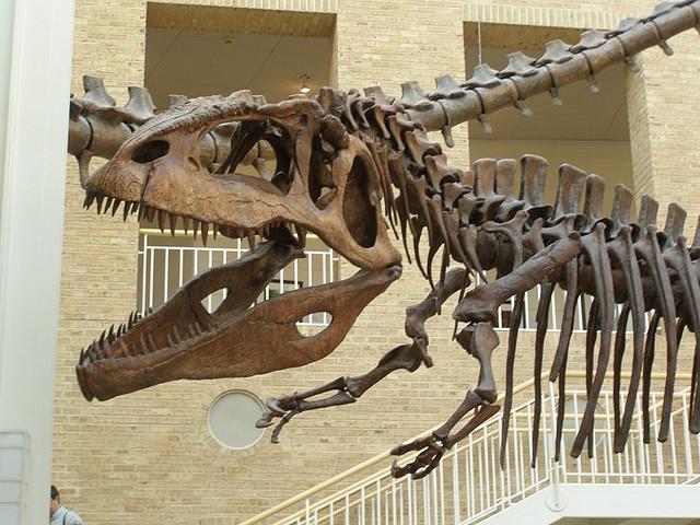 Fernbank-Gigantosaurus