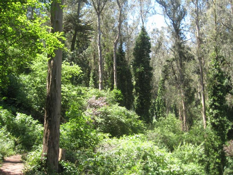 Lush Sutro Forest (800x600)