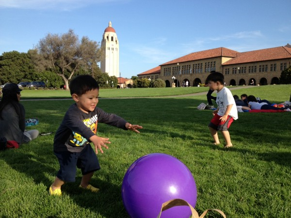 stanford oval lawn
