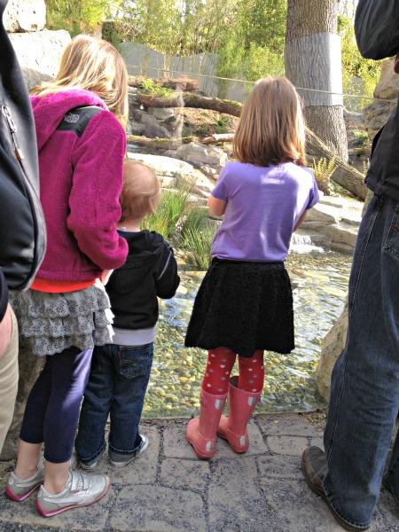 SEATTLE-Zoo-Photos-4