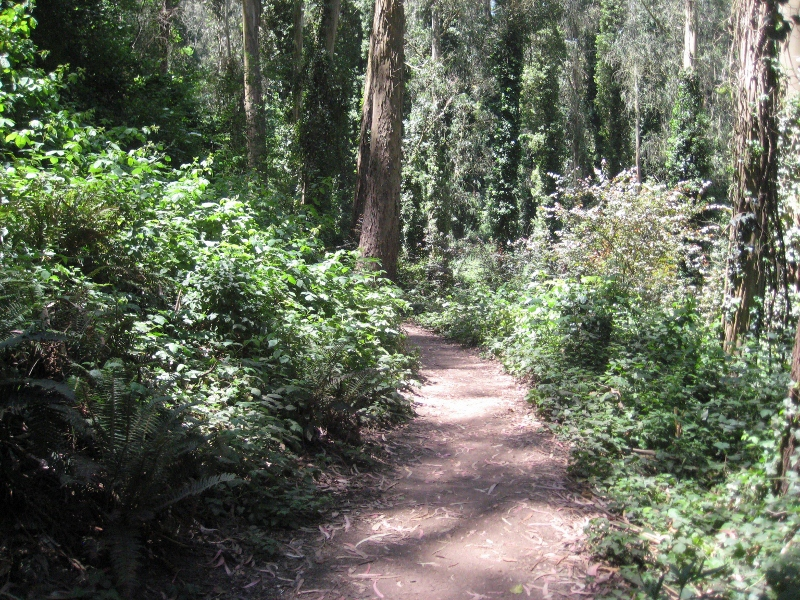 Trail in Sutro Forest