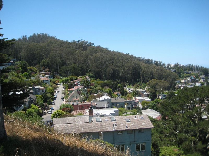 View of Sutro Forest from Tank Hill  (800x600)