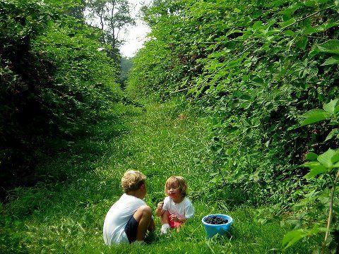 berry-field-kids