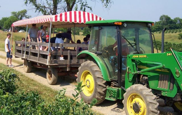 blueberry-picking-tractor