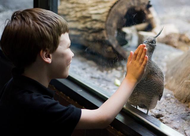 kid-zoo