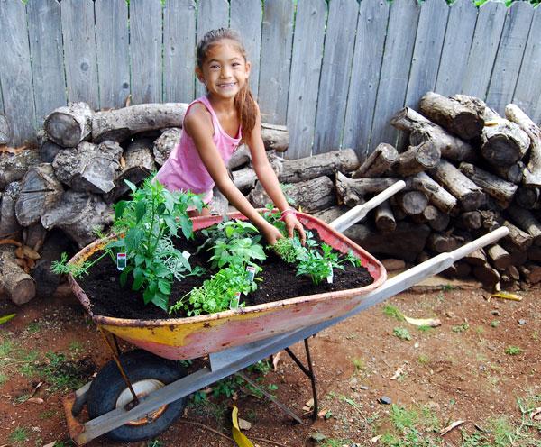 plantación-de-jardín-de-hierbas-1