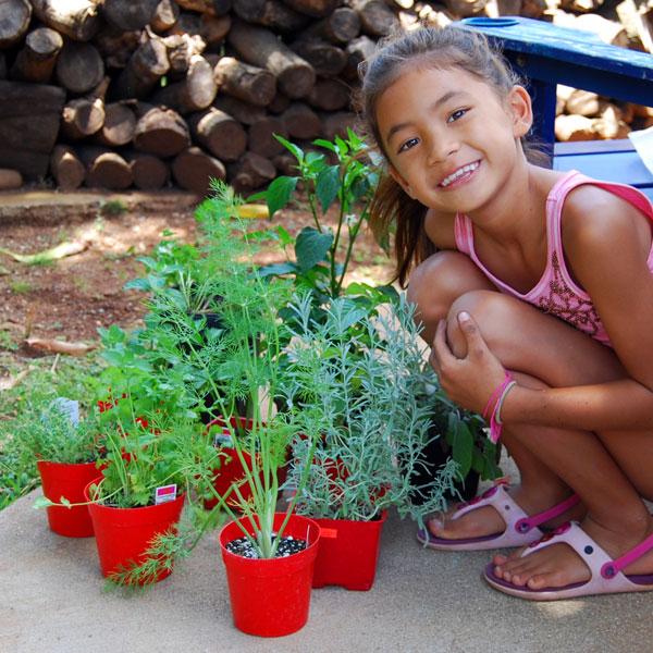 herb-garden-planting-2