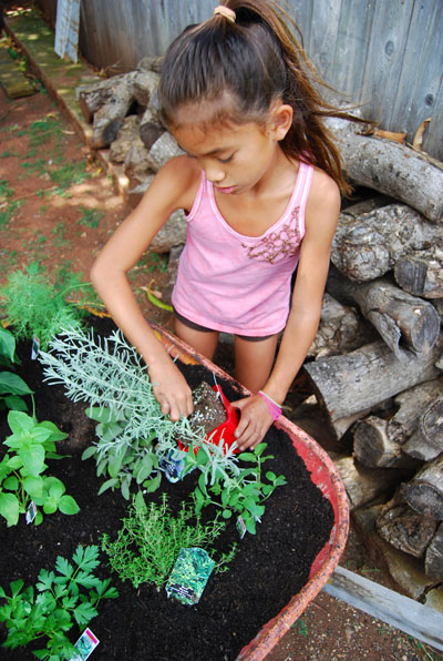 herb-garden-planting-6