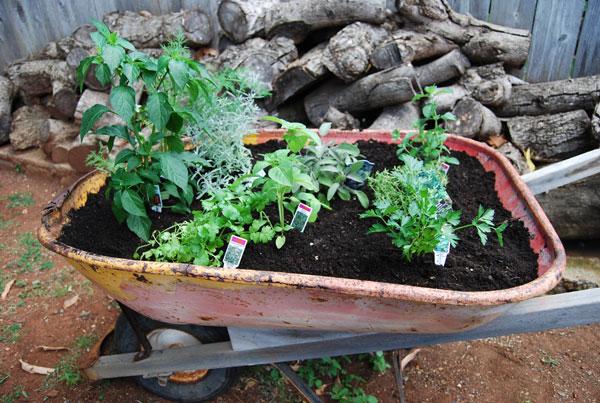 herb-garden-planting-8