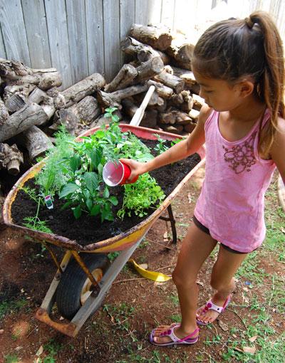 herb-garden-planting-9
