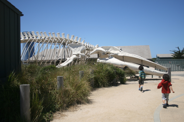 Whale-Bones