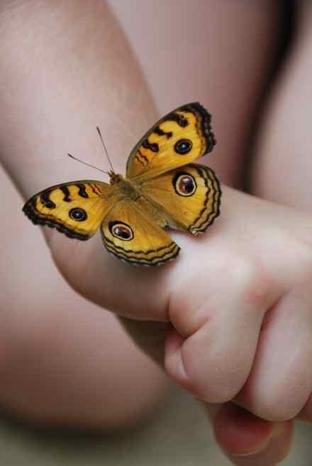 ButterflyFestival