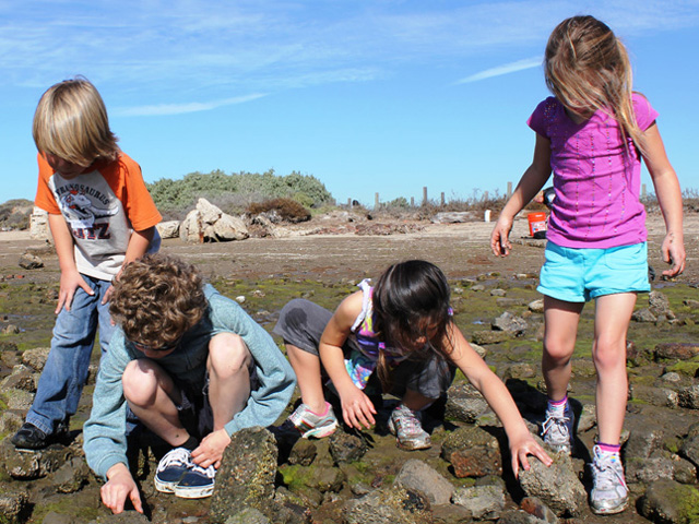 Children looking for crabs at the Living Coast Discover Center
