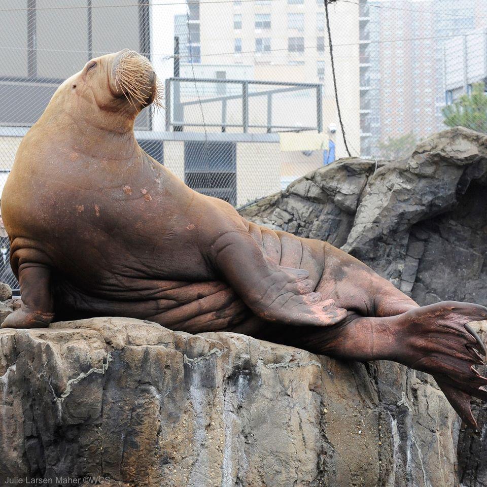 Celebrate a Sea Lion Anniversary at PIER 39