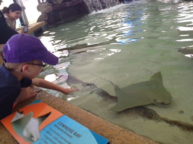We Touched Stingrays