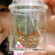 Butterfly in jar at Natural History Museum