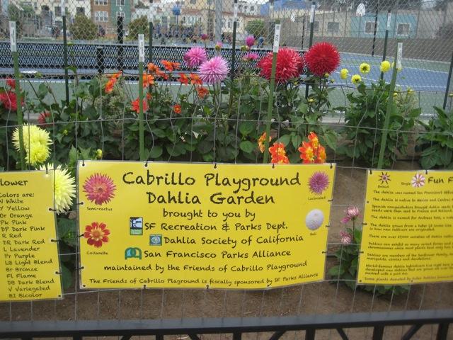 cabrillo-playground-dahliagarden