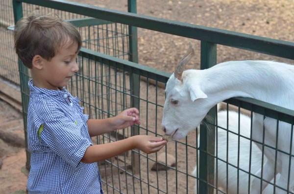 NorthGAZoo_Goat