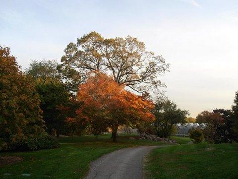 Fall - NY Botanical Garden 2