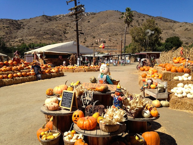 OMA'S PUMPKIN PATCH 10