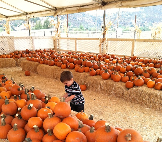 OMA'S PUMPKIN PATCH 6