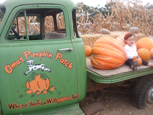OMA'S PUMPKIN PATCH 9