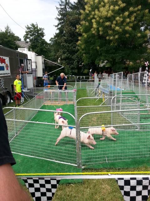 Piglet Racing