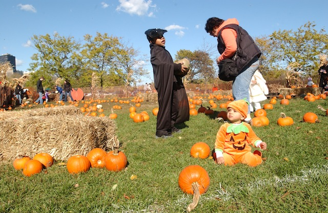 dvorak-pumpkins