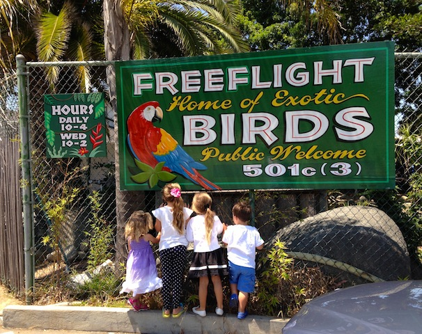 FREE FLIGHT EXOTIC BIRD - 1