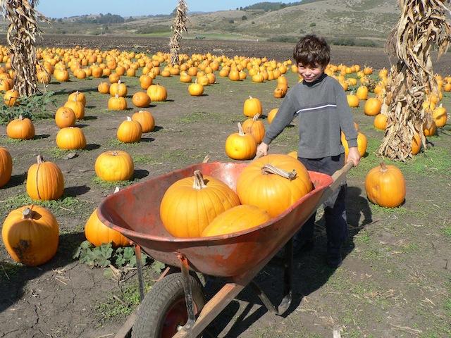 half-moon-bay-halloween-pumpkin