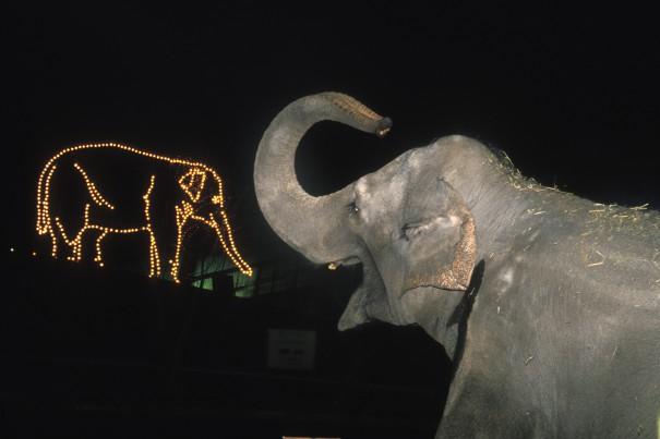 Oregon Zoo ZooLights Elephant