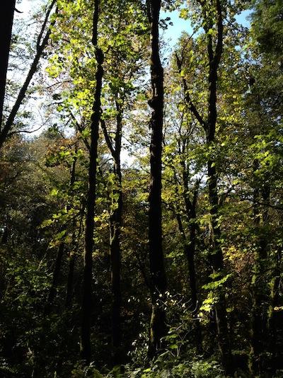 tcsp trees